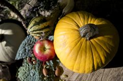 Healthy Harvest Fruit Vegetable and nuts on Tree Stump Royalty Free Stock Photography