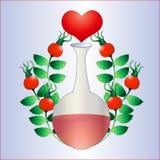 Healthy heart. Royalty Free Stock Photos