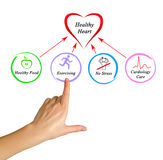 Healthy heart. Presenting diagram of Healthy heart royalty free stock photography