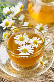 Healthy herbal camomile tea Stock Images