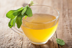 Healthy herbal sage tea with green leaf in glass cup Stock Photos