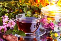 Healthy herbal tea royalty free stock images