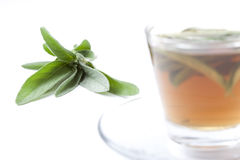 Healthy herbal tea with fresh sage, white background Royalty Free Stock Image