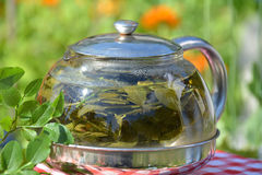 Health herbal tea of bilberry leaves in the kettle Royalty Free Stock Photography