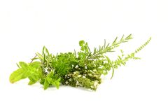 Healthy herbs. Several herbs on white beckground Stock Photography