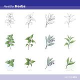 Healthy herbs Royalty Free Stock Images
