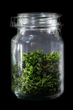 Healthy homemade tea leaves in glass container. Healthy homemade green tea leaves in glass container isolated on black background Royalty Free Stock Photography