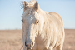 Healthy horse Royalty Free Stock Image