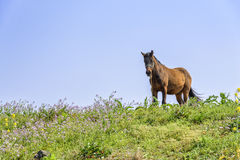 Healthy Horse on a hill Stock Photos