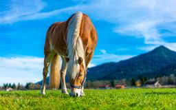 Healthy Horse In Pasture Portrait stock photography