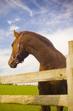 Healthy horse portrait Stock Photo