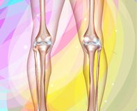 Healthy human legs Stock Photo