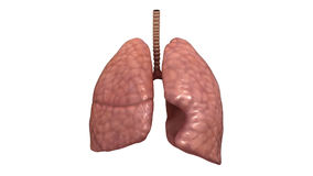 Healthy Human Lungs stock footage