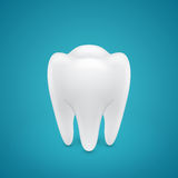 Healthy human tooth Stock Photography