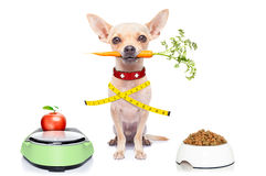 Healthy hungry dog Royalty Free Stock Images