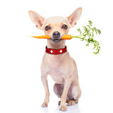 Healthy hungry dog Stock Photography