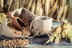 Healthy ingredients for bread and buns with several grains Stock Photo