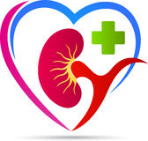 Healthy kidney care. A vector drawing represents healthy kidney care design Stock Images