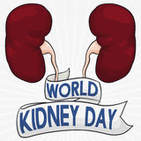 Healthy Kidneys with Greeting Ribbon to Commemorate World Kidney Day, Vector Illustration Royalty Free Stock Photography