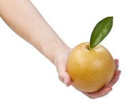 Healthy Large Apple Pear in Hand Stock Photos