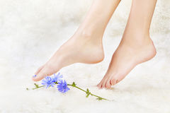 Healthy legs and flower Stock Image