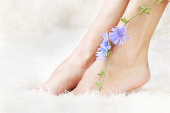 Healthy legs and flower Royalty Free Stock Photos