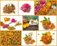 Healthy life collage. Rose, chamomile, marigold Royalty Free Stock Image
