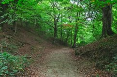 Long pleasant path for a relaxing walk in the forest. stock images