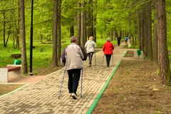 Healthy lifestyle. Nordic walking. Adult man and two women are engaged in athletic walking royalty free stock image