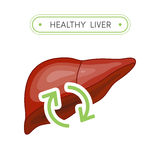 Healthy liver concept Royalty Free Stock Image
