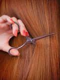Brown hair. Healthy long brown hair and scissors royalty free stock image