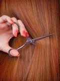 Brown hair Royalty Free Stock Image