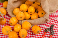 Healthy loquat harvest. Still life with some freshly picked loquats royalty free stock photo