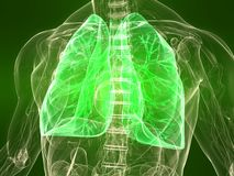 Healthy lung Royalty Free Stock Photography