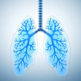 Healthy lungs. Healthy human lungs 3D illustration royalty free illustration