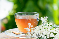 Healthy Medicine Elder fresh flower Tea Stock Photo