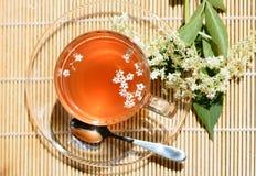 Healthy Medicine elderflower tea Stock Image