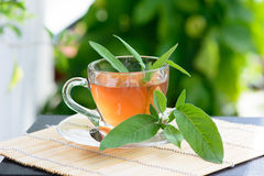 Healthy Medicine sage tea Royalty Free Stock Photos