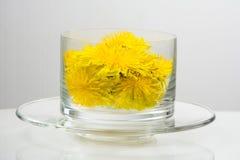 Healthy Medicine Springtime dandelion in glass Royalty Free Stock Photos