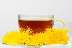 Healthy Medicine Springtime dandelion tea Stock Image