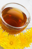 Healthy Medicine Springtime dandelion tea Royalty Free Stock Photo
