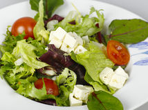 Healthy mix salad. Appetissing lettuce salad with cheese and tomato Stock Images