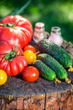 Healthy mix vegetables in garden Royalty Free Stock Images