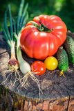 Healthy mix vegetables in sunny garden Royalty Free Stock Images