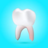 Healthy molar tooth. A vector illustration of a 3-D healthy molar tooth on a background with reflection Royalty Free Stock Image