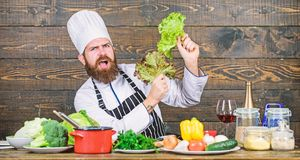 Healthy nutrition. Healthy food recipe. Eat healthy. Dieting concept. Man wear hat and apron hold lettuce. Bearded. Hipster professional chef hold lettuce royalty free stock photography