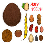 Healthy nutritious nuts, beans and seeds sketches Royalty Free Stock Photo