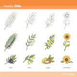 Healthy oils. Plant set including neem, acai palm, argan and sunflower (plant, flower, fruit, seeds Royalty Free Stock Images