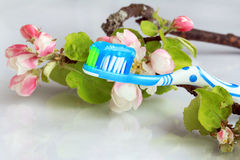 A healthy oral hygiene Stock Images