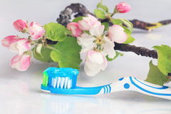 A healthy oral hygiene Stock Photos
